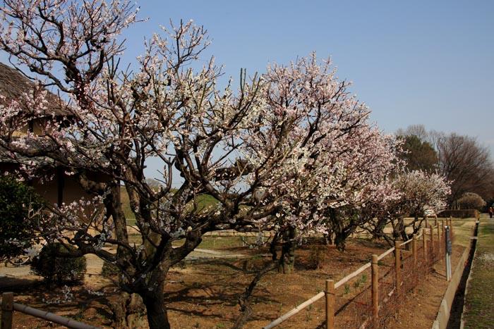公園へ行こう!|埼玉県と周辺の公園ガイド