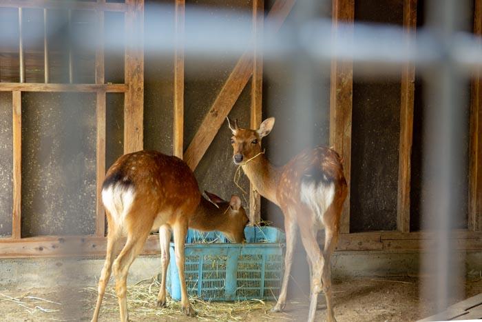大崎 公園 子供 動物園